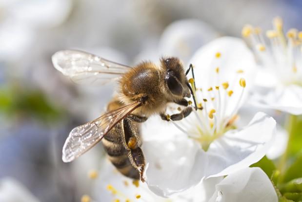 Sekrety miodu, czyli Dzień Pszczół w Kasprowiczu